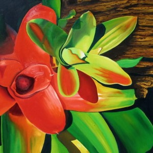 bromeliad, tropical plants, succulent, red and green plants,
