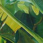 banana leaves, green leaves, translucent leaves, patterns in leaves,