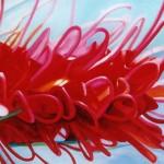 grevilia, flower portrait, red flower, macro flower, botanical works