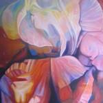 pink sonata, pink petals, macro flowers, macro flower