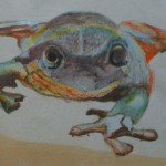 frog, amphibian, frog drawing, frog sketch