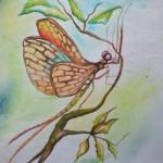bug drawings, botanical drawings, damselfly sketch damselfly
